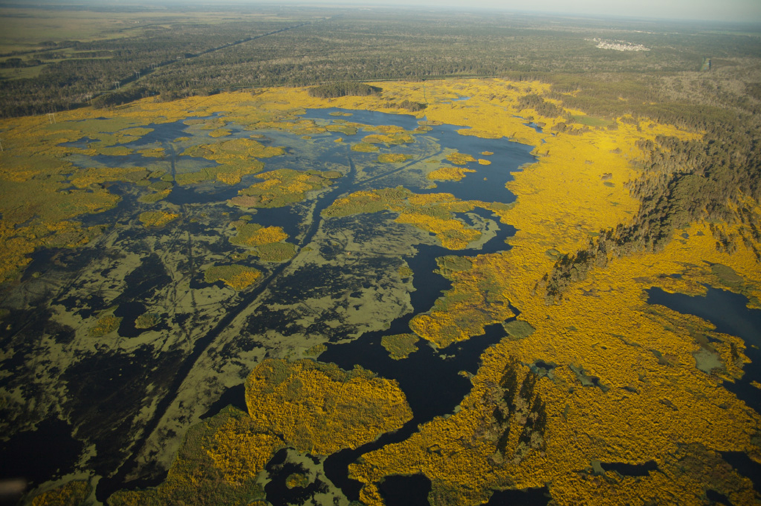 Multiple habitats are seen in an aerial view of the Louisiana coastline.