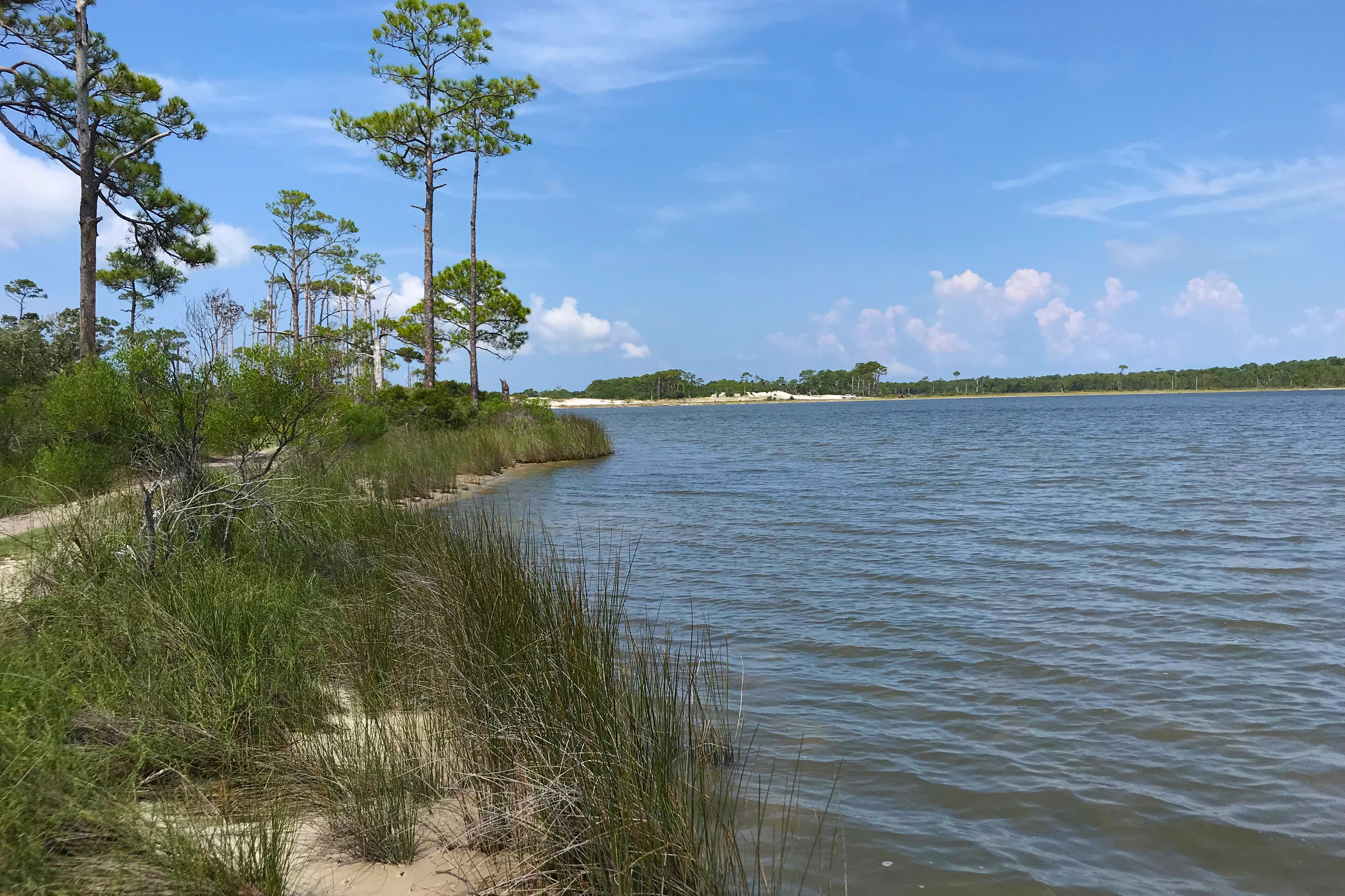A lagoon shoreline has new plants, and other vegetation along the water's edge.