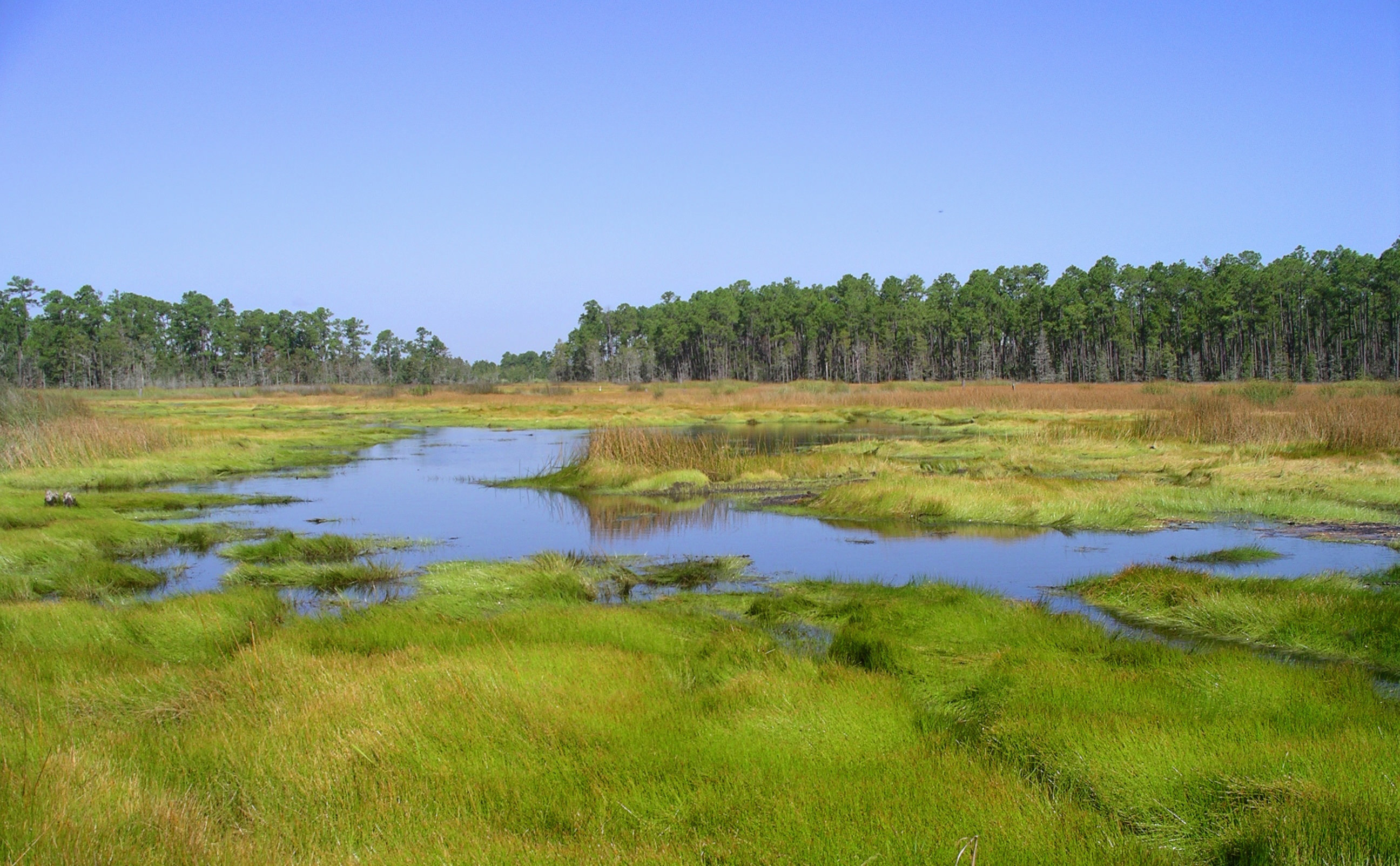 Grand Bay National Estuarine Research Reserve landscape.