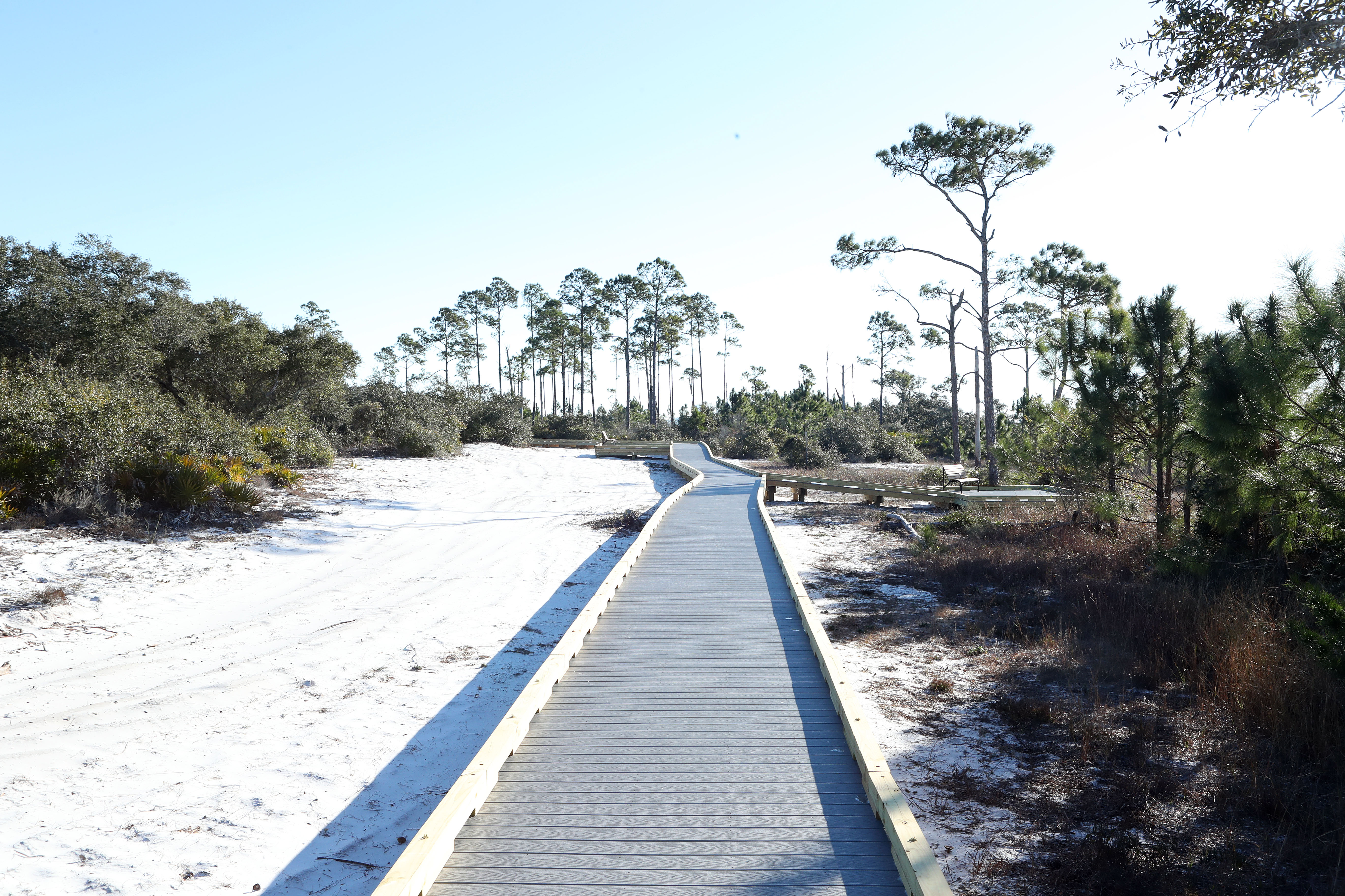 A section of the newly re-opened Jeff Friend Trail in Bon Secour National Wildlife Refuge in Alabama.