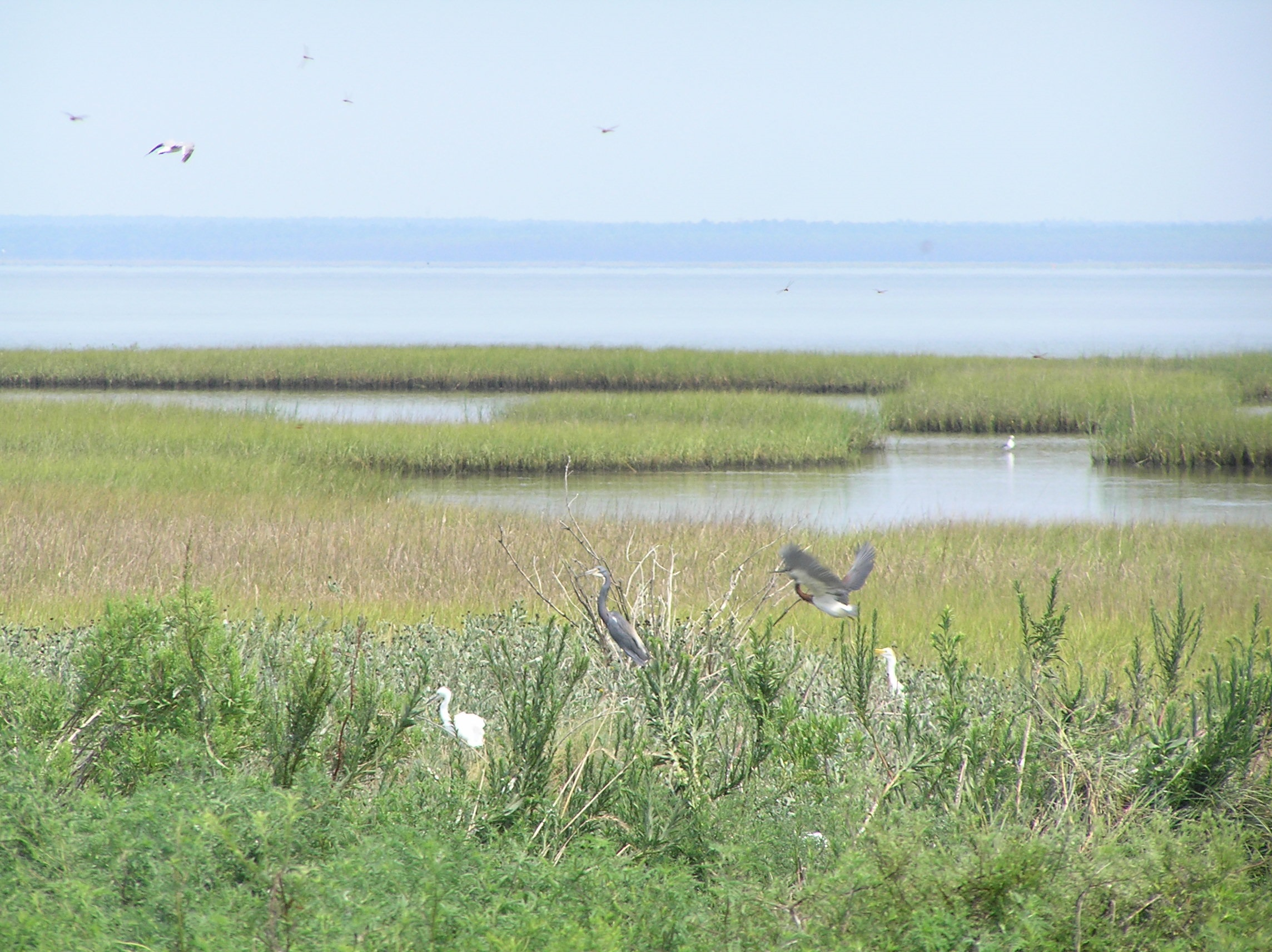 Birds in a marsh