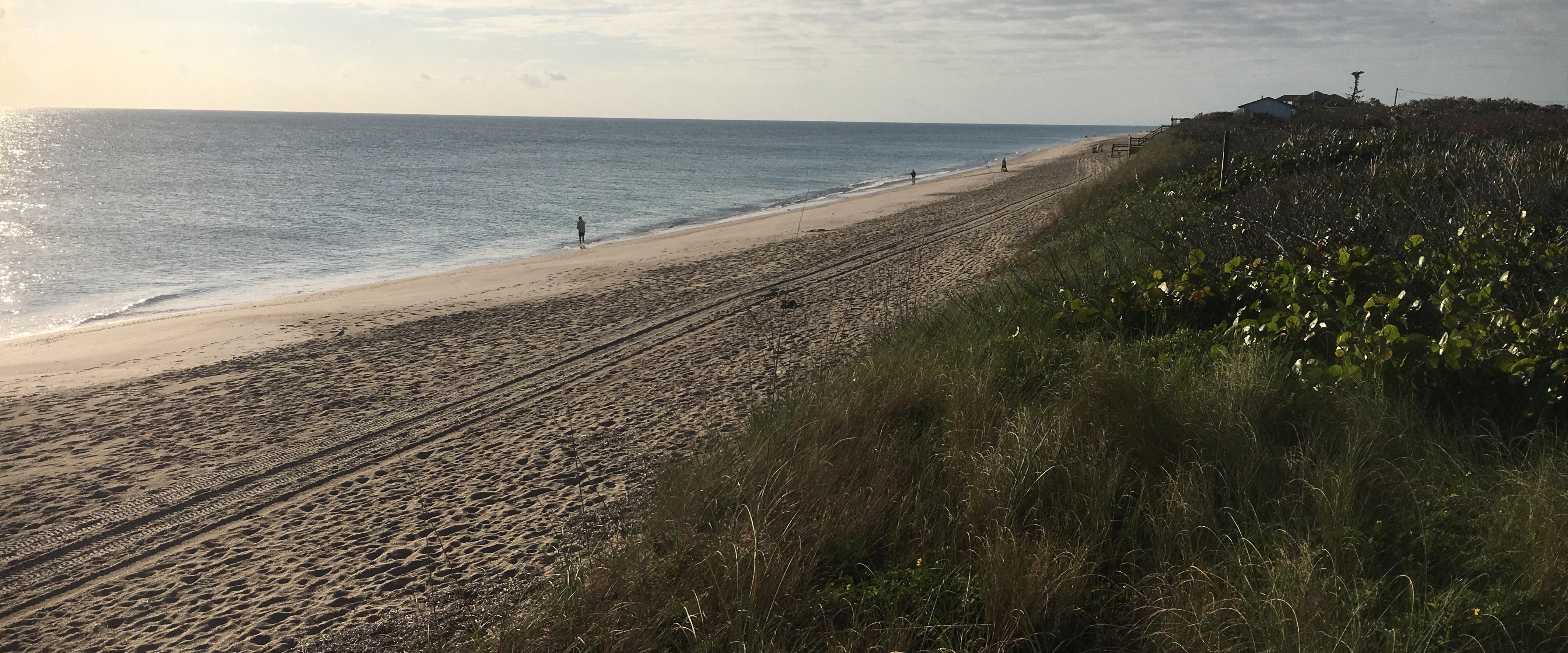 Conserved Acreage on Florida's East Coast Benefits Sea Turtles