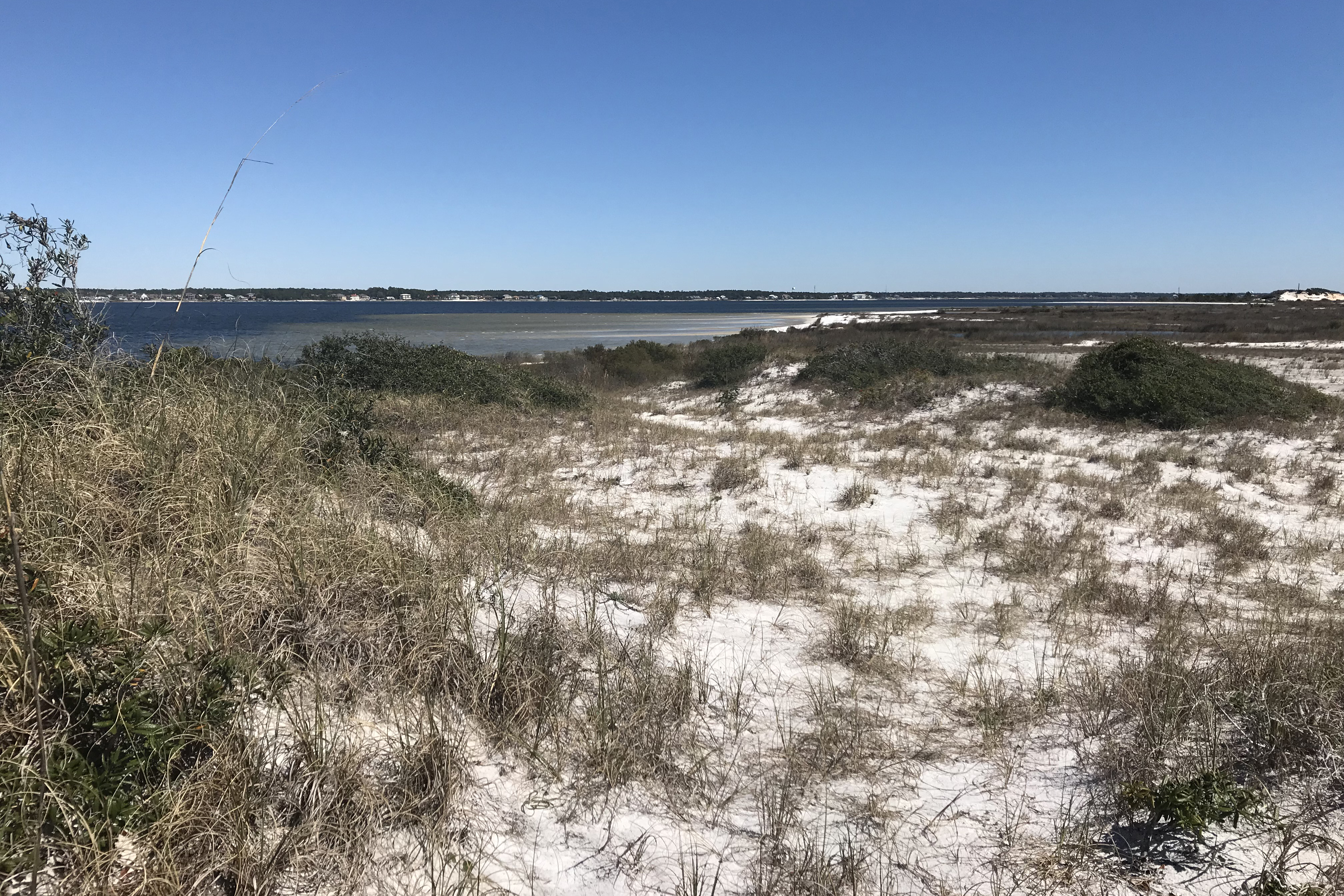 Dunes and vegetation on a Florida beach, looking out into the Gulf of Mexico.