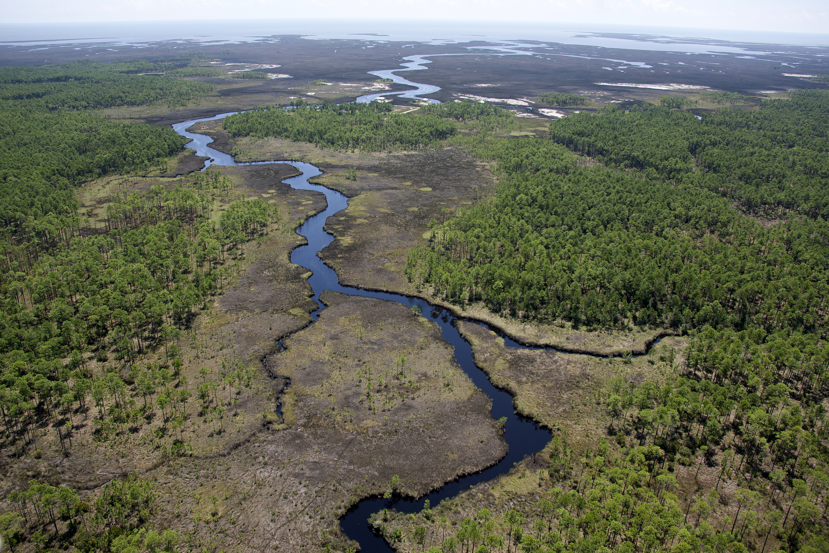 Aerial view of a river meandering into an estuary and bay in Mississippi. Credit: USFWS