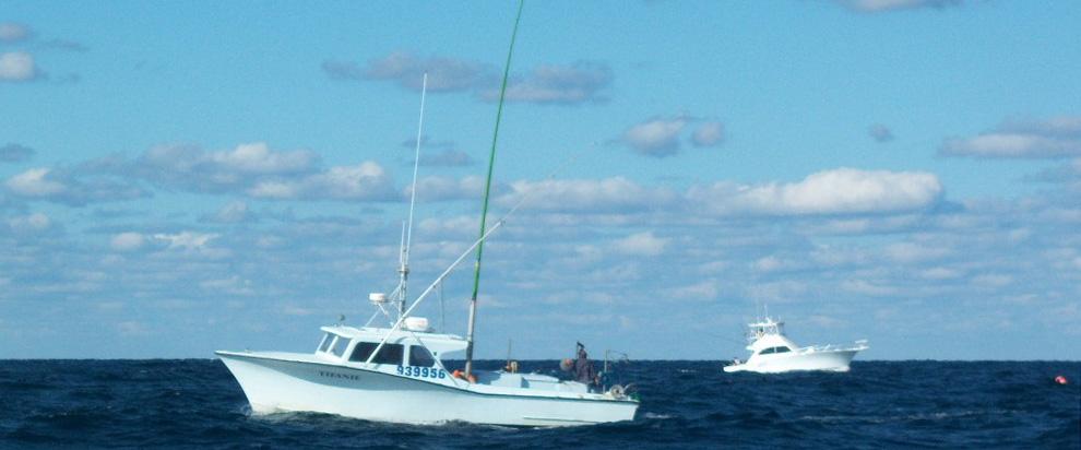 Project to Restore Oceanic Fish Now Underway
