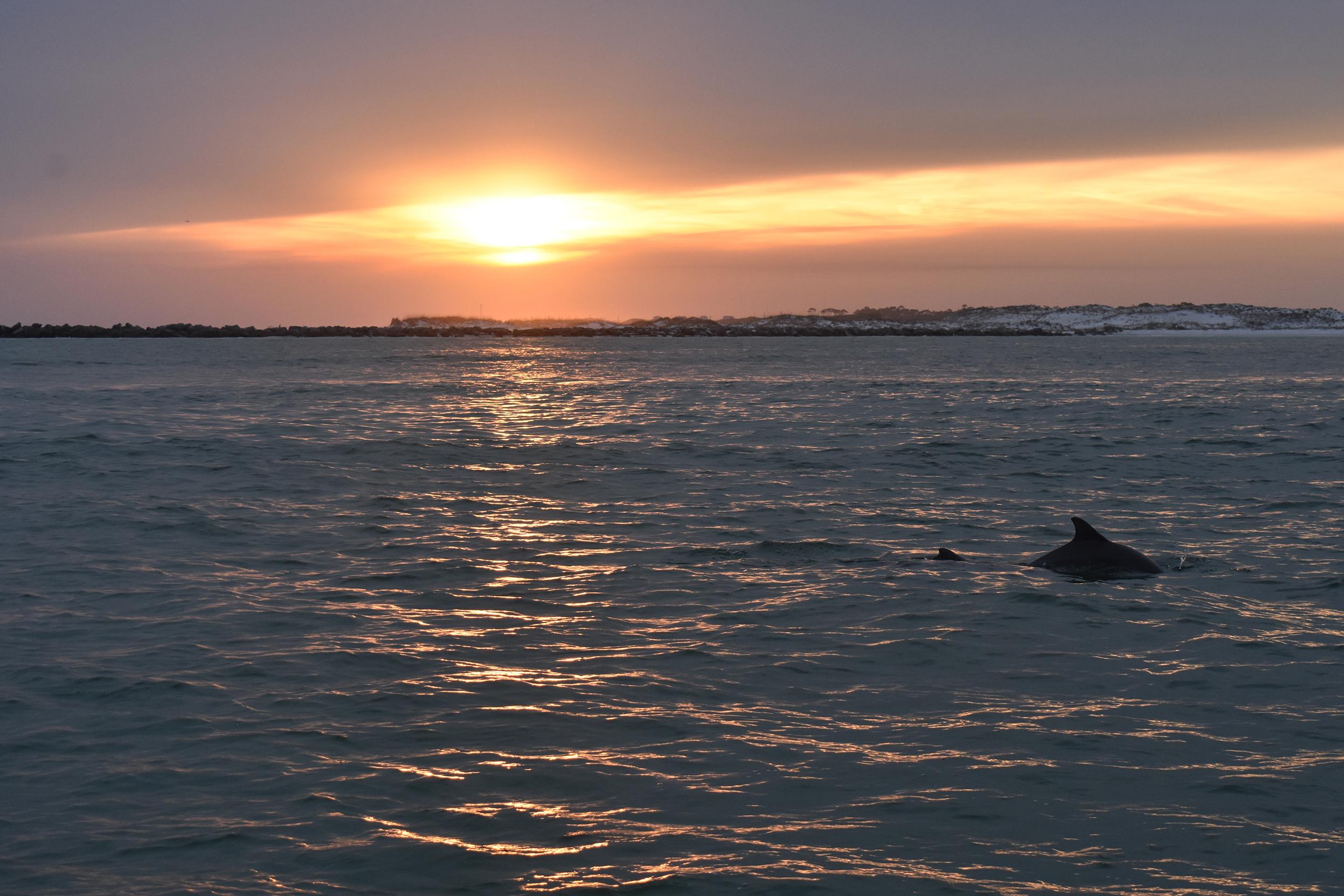 The sun sets over water with dunes in the background. A dolphin dorsal fin surfaces in the foreground