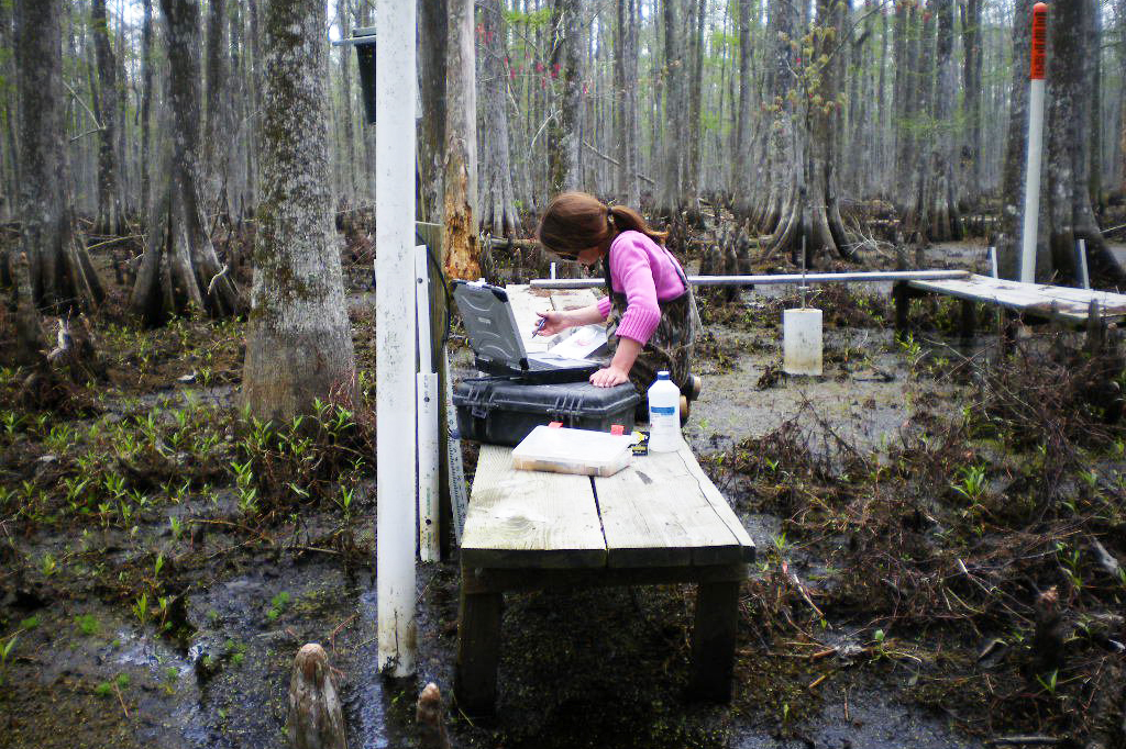 A female scientist records data near equipment in a swamp full of trees.