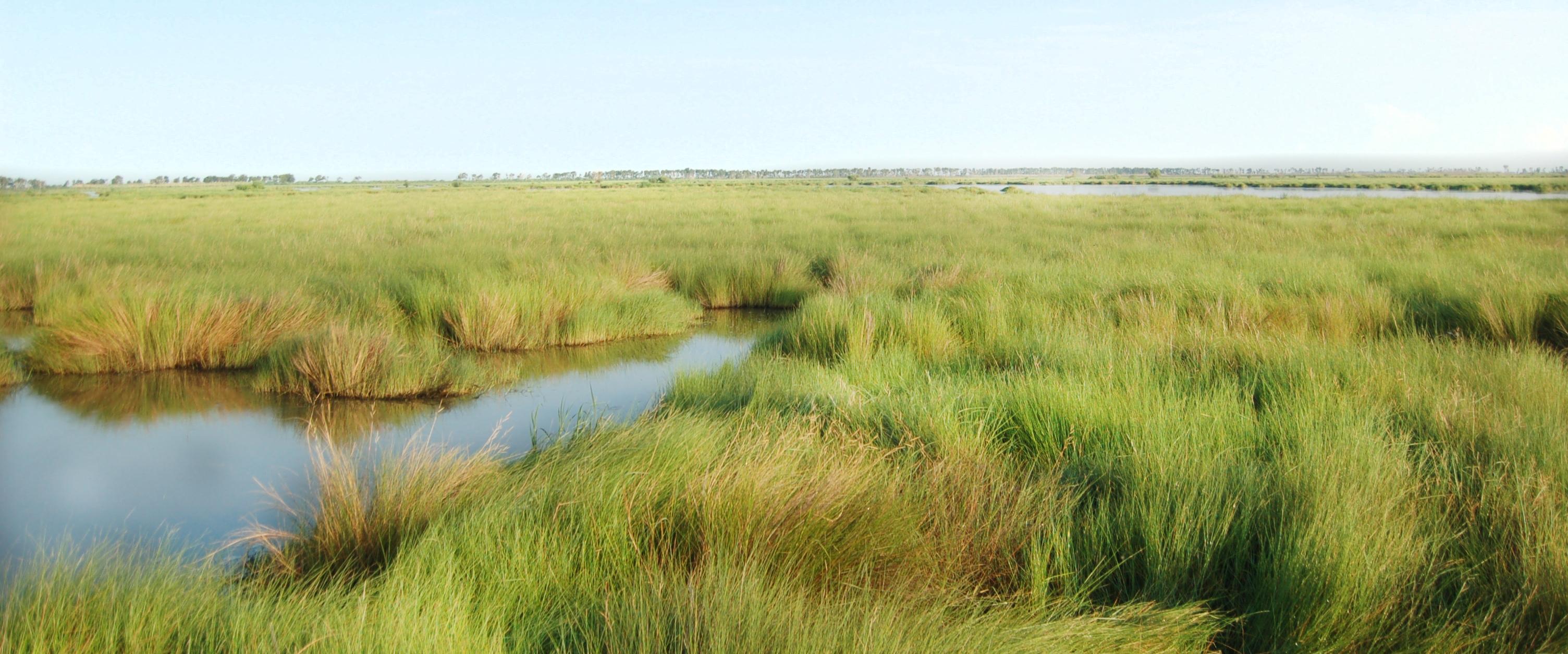 Louisiana Trustees Initiate Restoration Plan #6 for Wetlands, Coastal and Nearshore Habitats