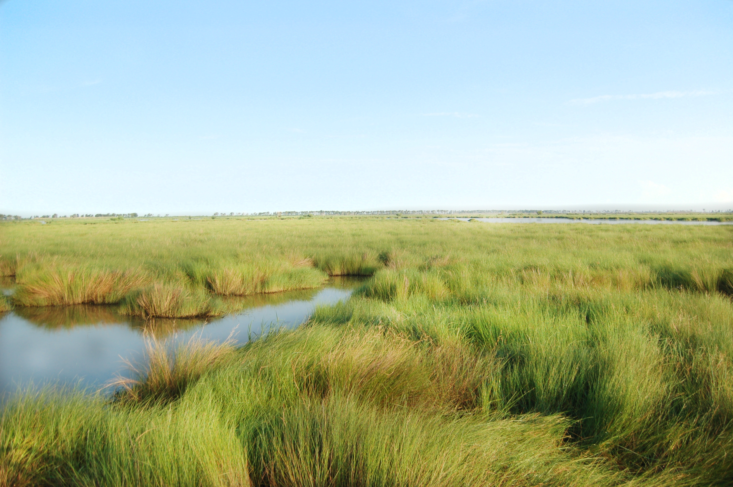 A landscape of marsh, grasses and natural water channels.