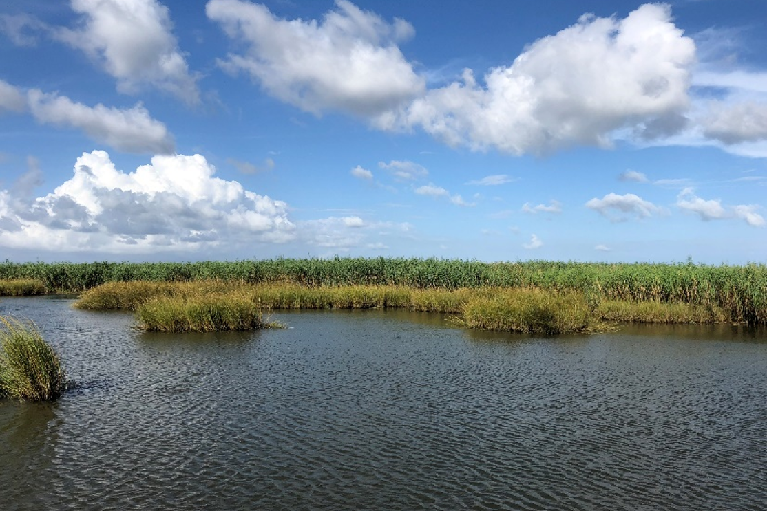 Water and marsh grass in the Spanish Pass area of Louisiana's Barataria Bay.