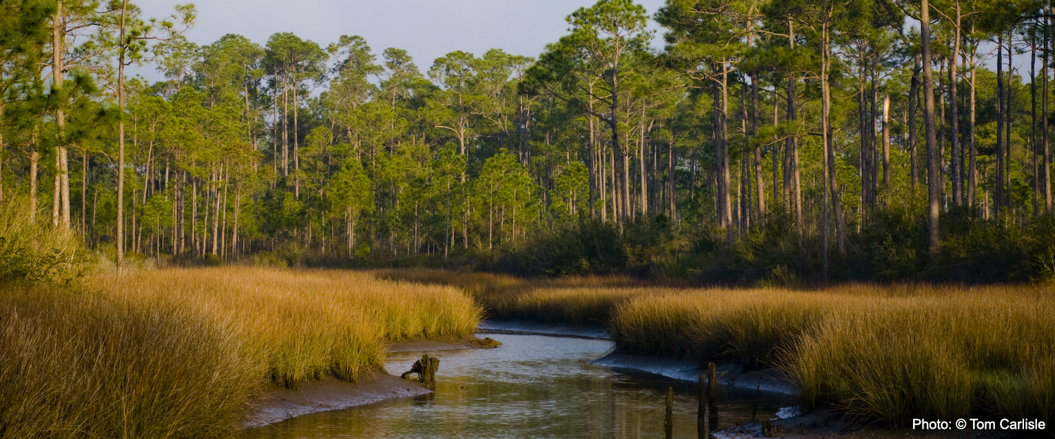 Mississippi Trustees Release Draft Supplemental Plan for Grand Bay