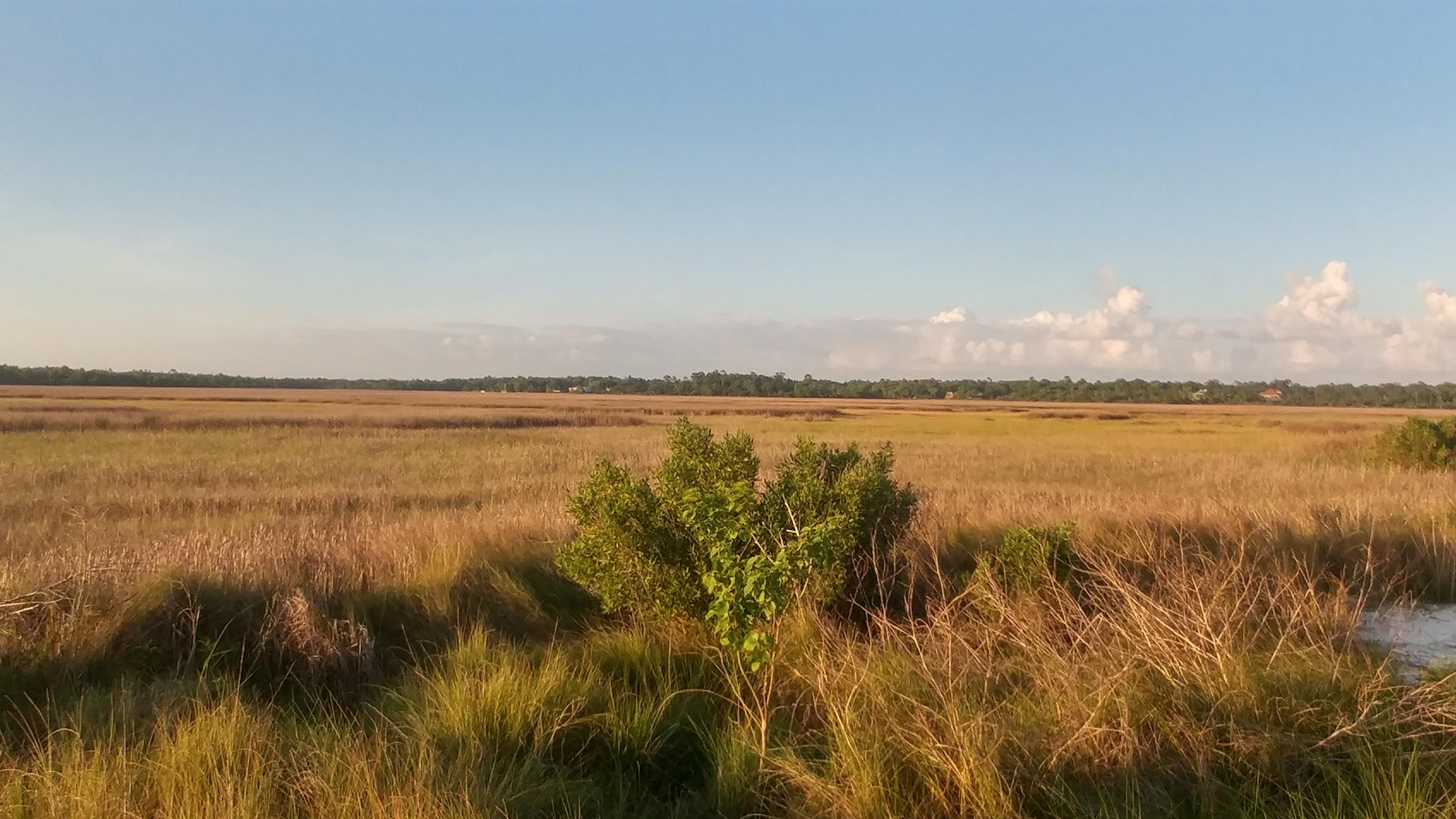 Graveline Bay preserve wetlands in Mississippi.