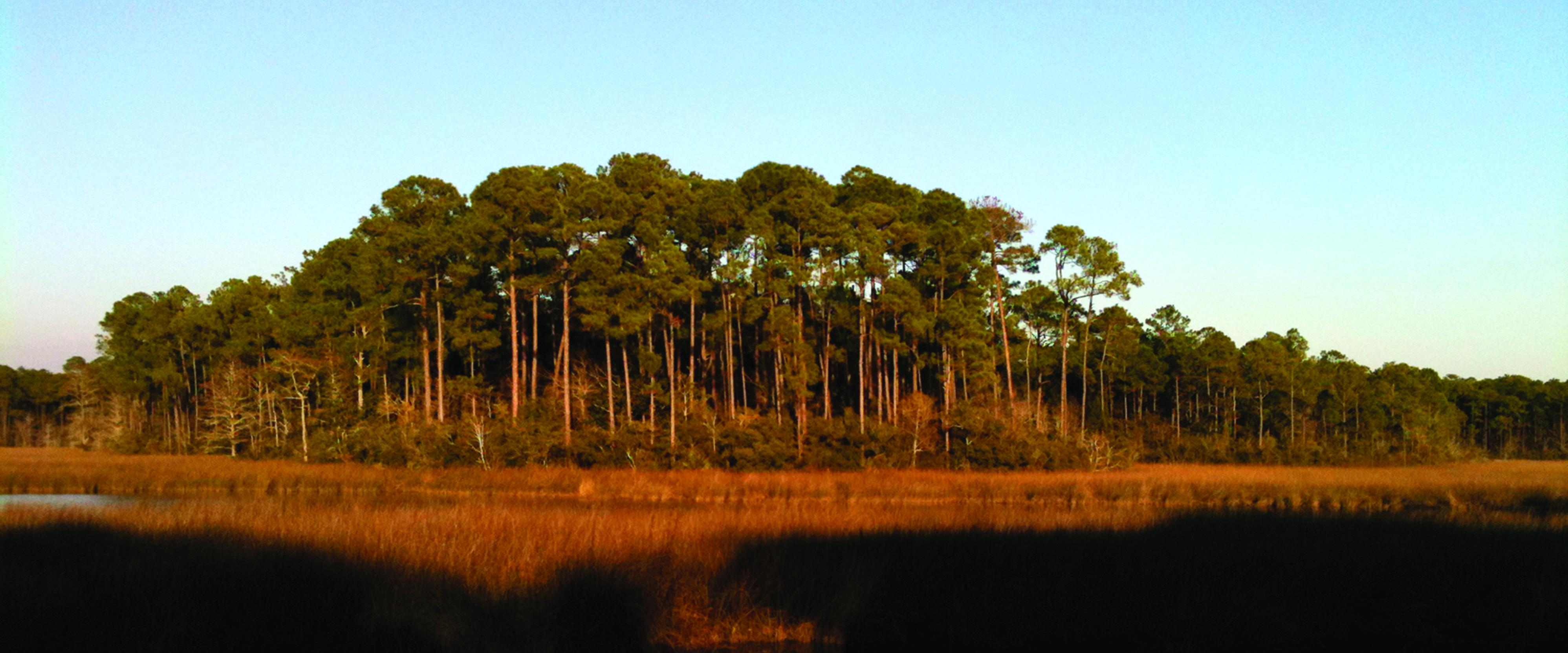Mississippi Trustee Implementation Group Releases First Draft Restoration Plan
