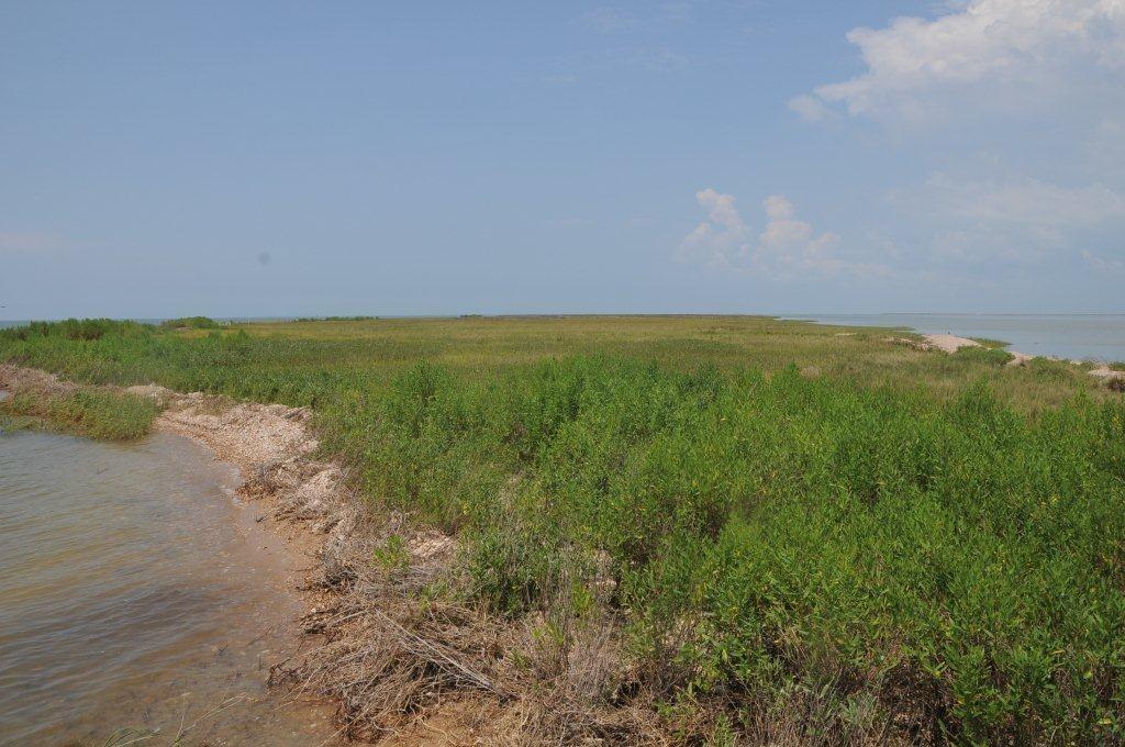 Marsh in Alabama