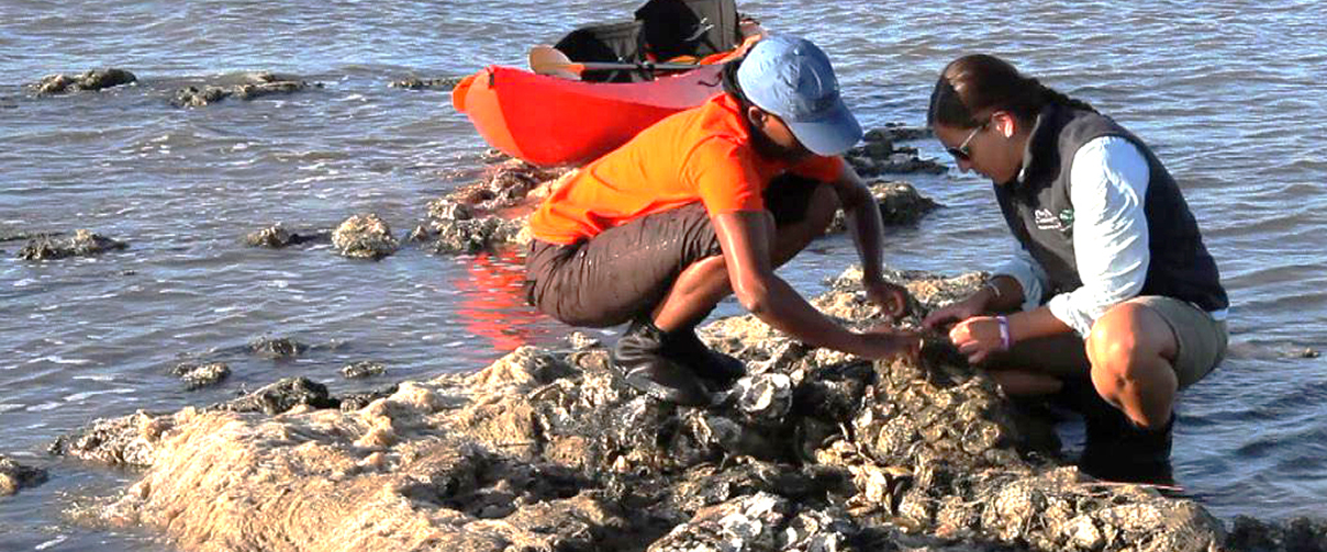 Louisiana Trustees Initiate Restoration Plan #5 for Oysters and Marine Mammals