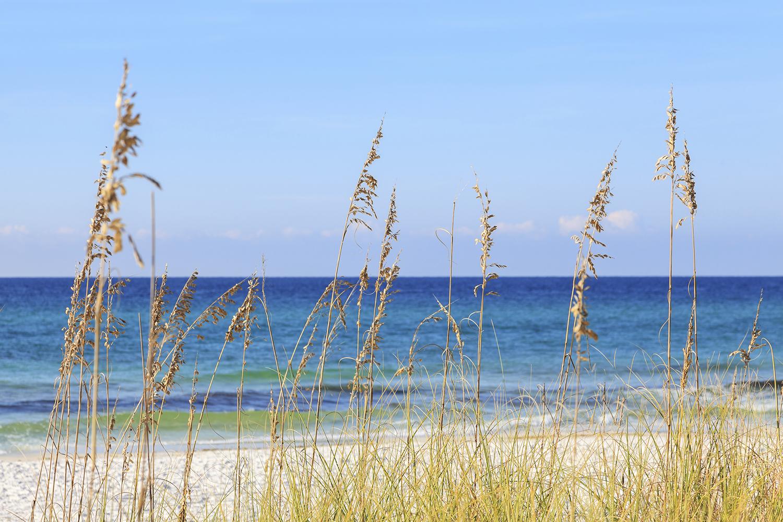 Beach dune and ocean