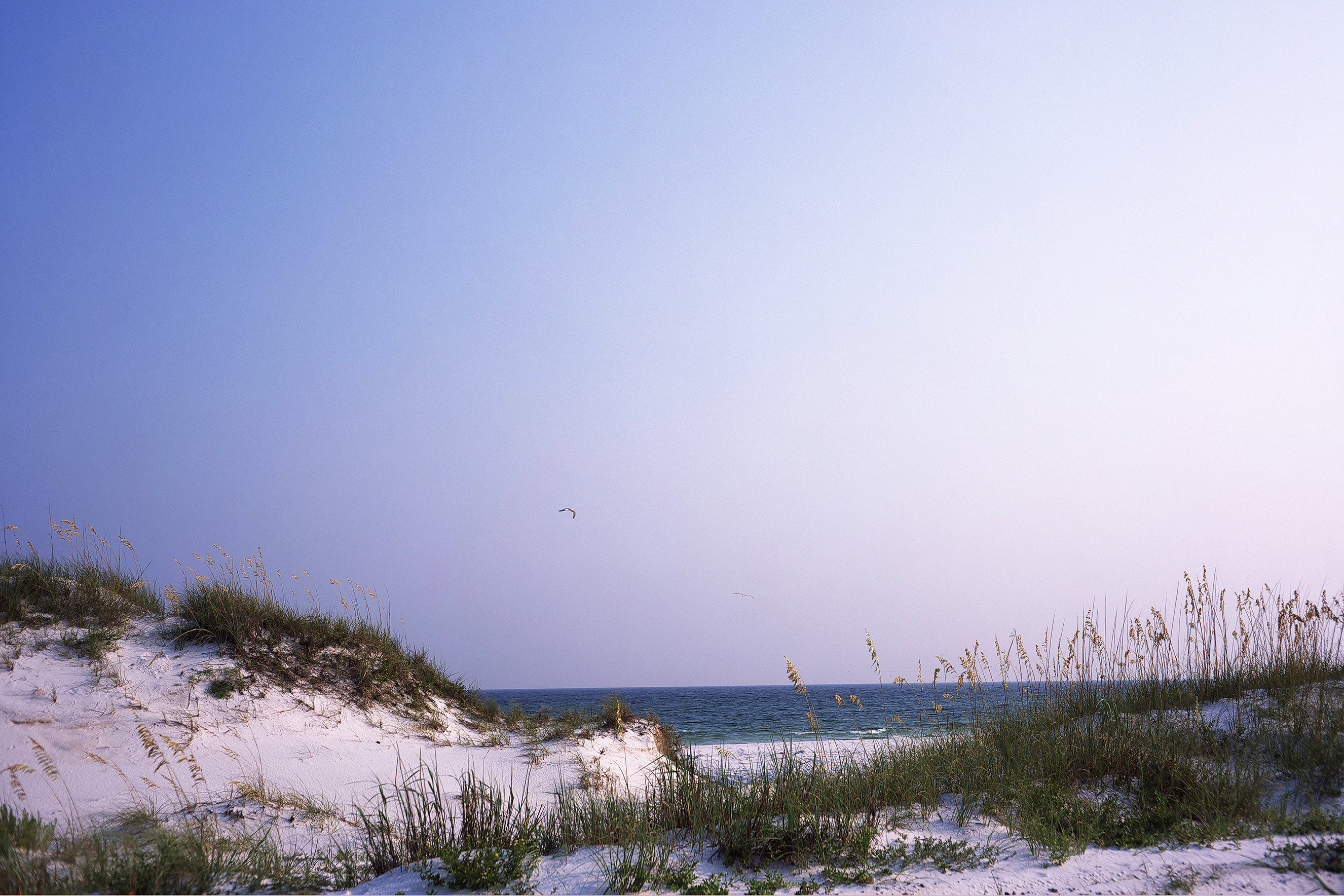 Dunes and vegetation on a Santa Rosa Island Florida beach. The Gulf of Mexico is in the background.