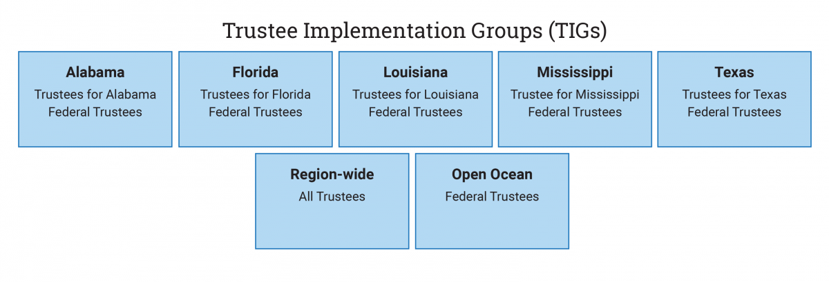 Trustee Implementation Group Organization Chart