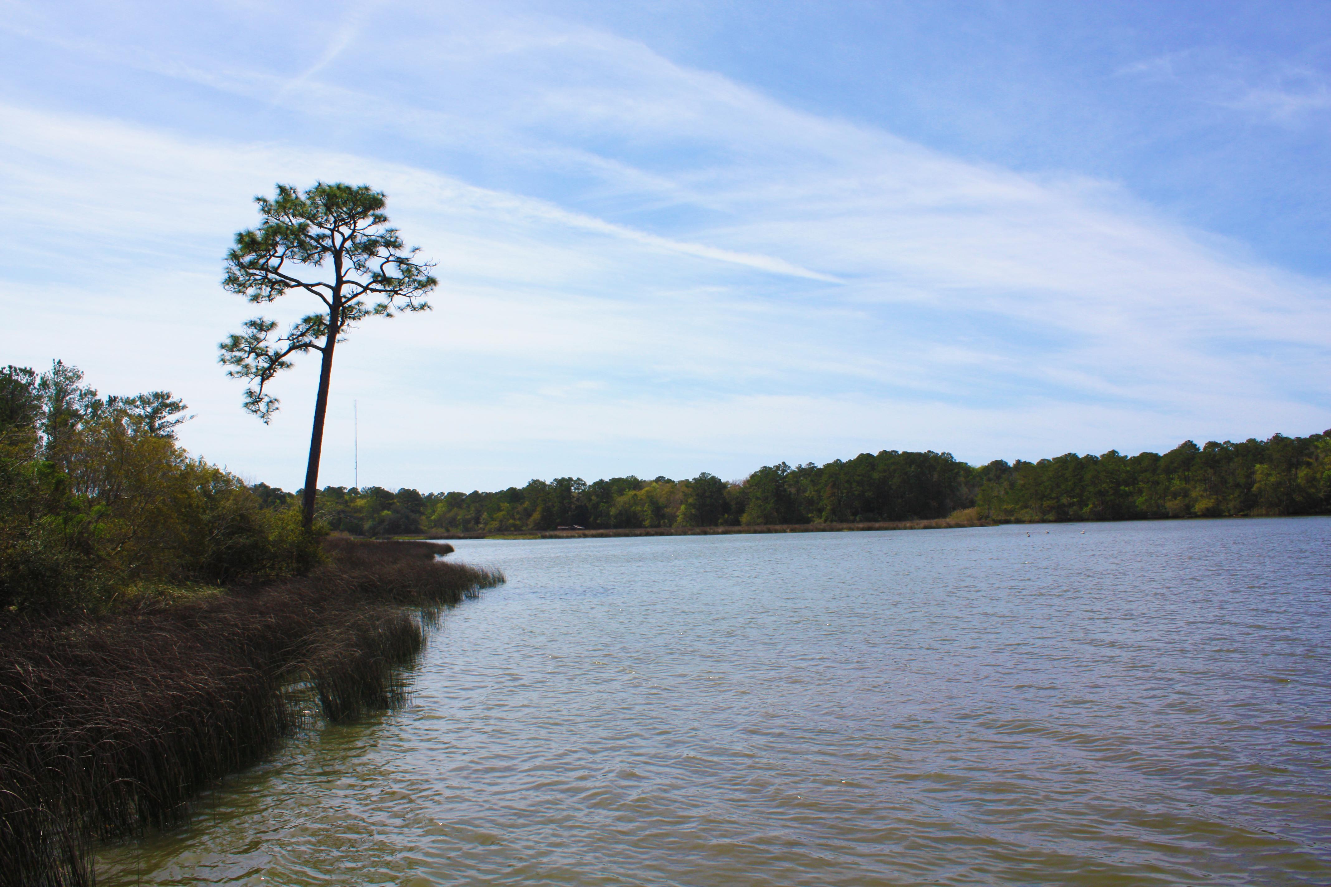 Marsh along the shore of Weeks Bay, Alabama.