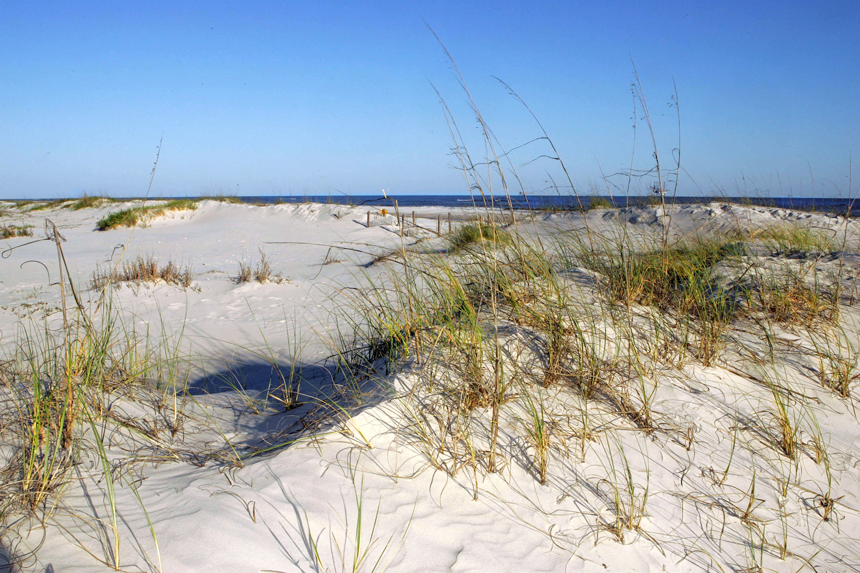 Dunes and grass at a beach in the Bon Secour National Wildlife Refuge