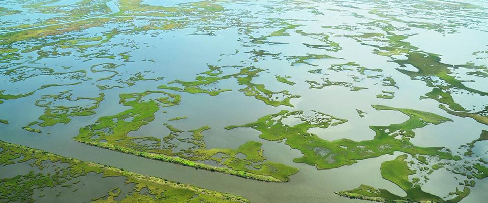 Louisiana Trustees Finalize Barataria Strategic Restoration Plan