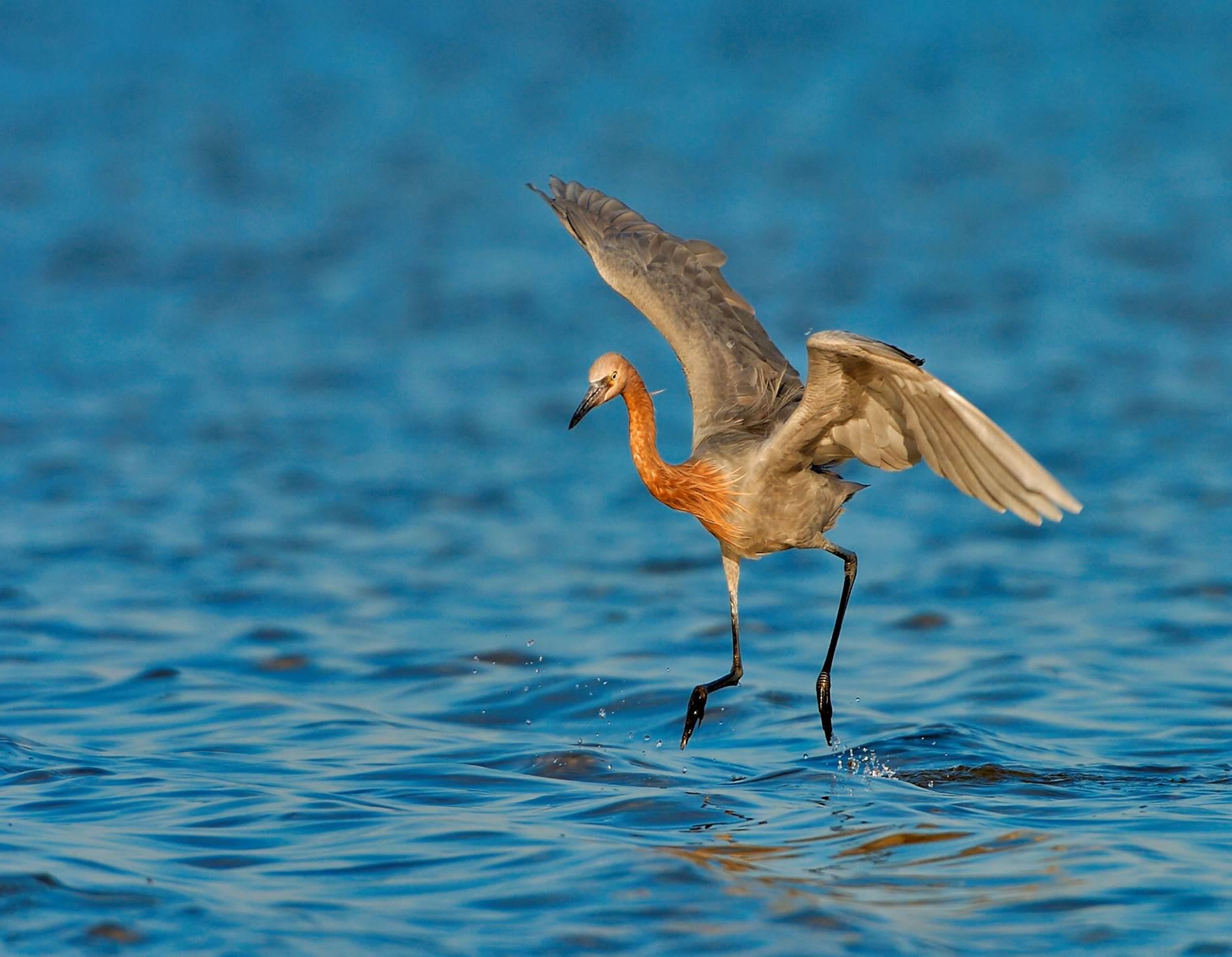 Bird landing on water