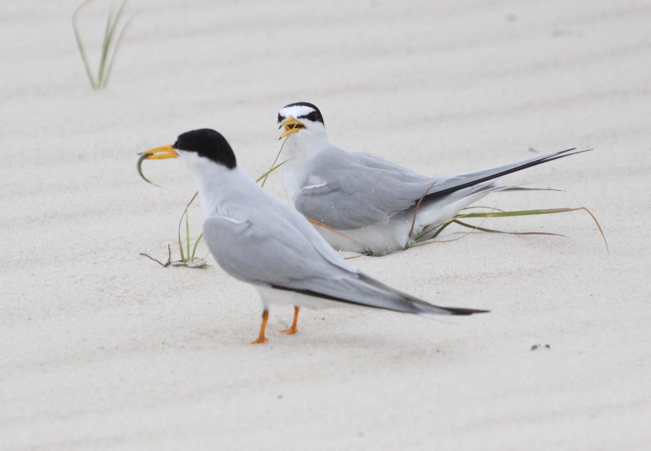 Two birds on the beach