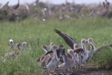 Public Meeting Update: Louisiana Draft Restoration Plan for Queen Bess Island