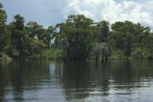 Louisiana Area Trustees Release Final Restoration Plan for Rabbit Island and Jean Lafitte National Historical Park and Preserve