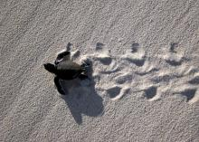 Gulf Spill Restoration: One Year After Settlement