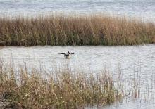 Community Provides Feedback on the Florida Pensacola Bay Living Shoreline Project