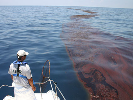 surveying oiled sargassum