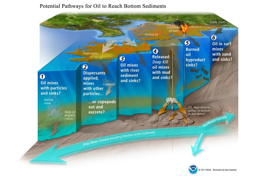 Visualizing The Deepwater Horizon Oil Spill Noaa Gulf