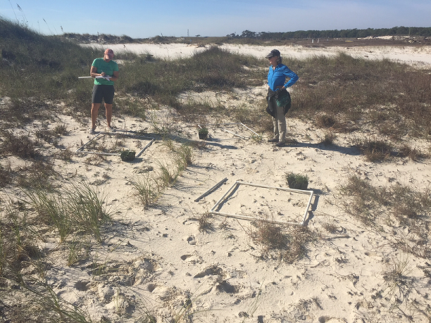 Researchers performing dune monitoring=
