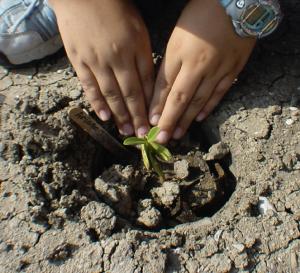 TX planting at Bahia Grande.
