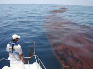 Surveying oiled sargassum.