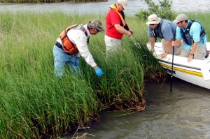 NRDA team checks for oil in marsh.