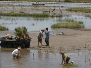 Volunteers conduct salt marsh planting.