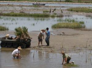 Volunteers conduct salt marsh planting.