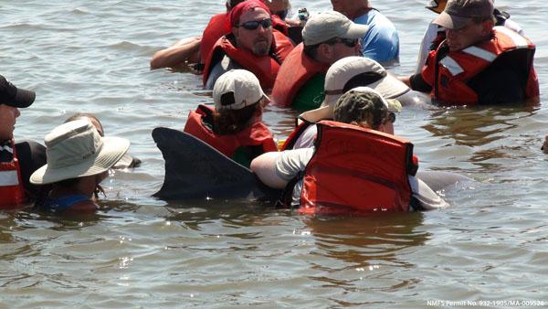 Guiding a Dolphin