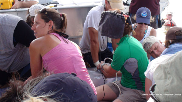 Aug 2011: A veterinarian performs an ultrasound to assess a Barataria Bay dolphin's health.