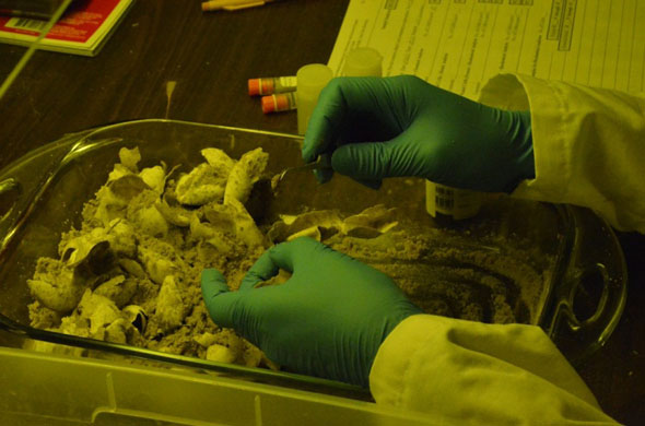 Extract Tissue Turtle Eggs_NPS