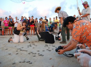 Donna Shaver and park Superintendent, Joe Escoto, release Kemp's ridley hatchlings while members of the local media look on. (Source: DOI DWH NRDA)